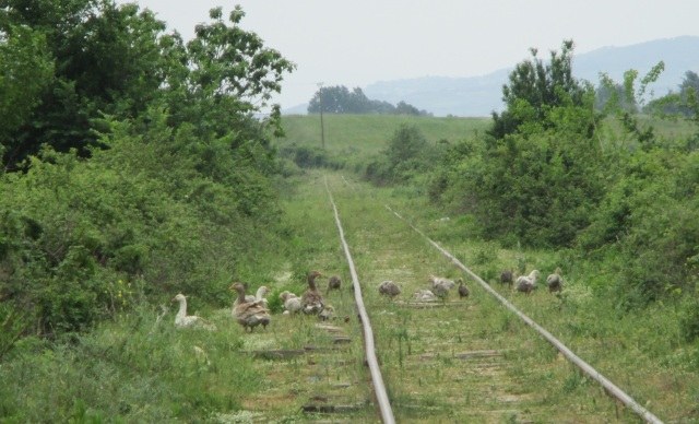 11_rail_1