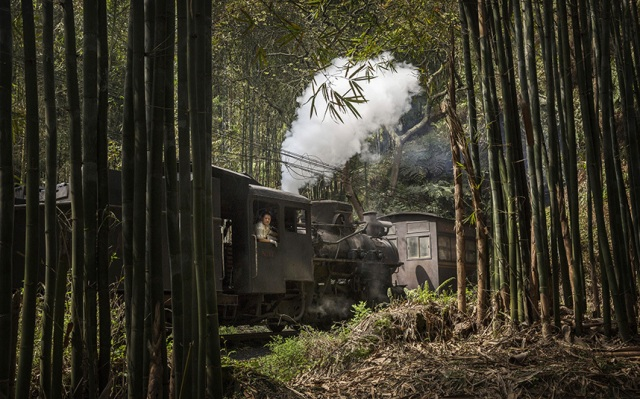 china-train-bamboo_3308806k