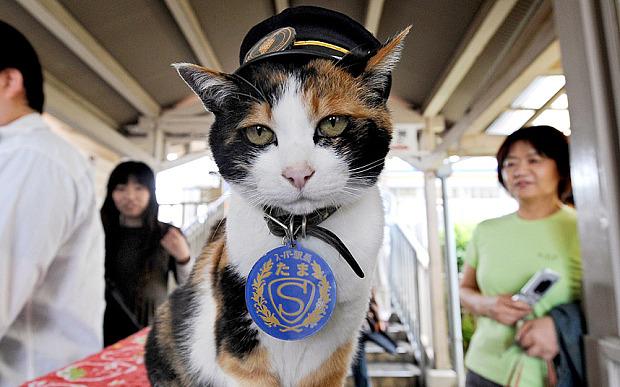 japan-station-cat_3357178b