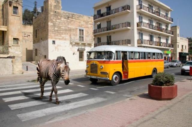 A%20Zebra%20crossing%20a%20Zebra%20crossing%20-%20Alamy-large