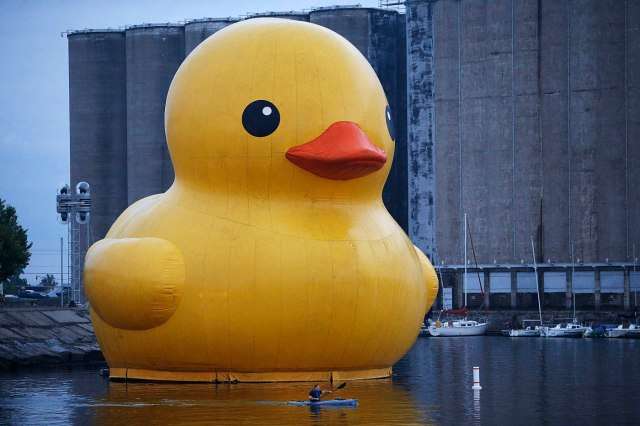 A kayaker passes the world's largest rubber duck as it floats in the Buffalo River near Canalside, Friday, Aug. 26, 2016.  (Derek Gee/Buffalo News)