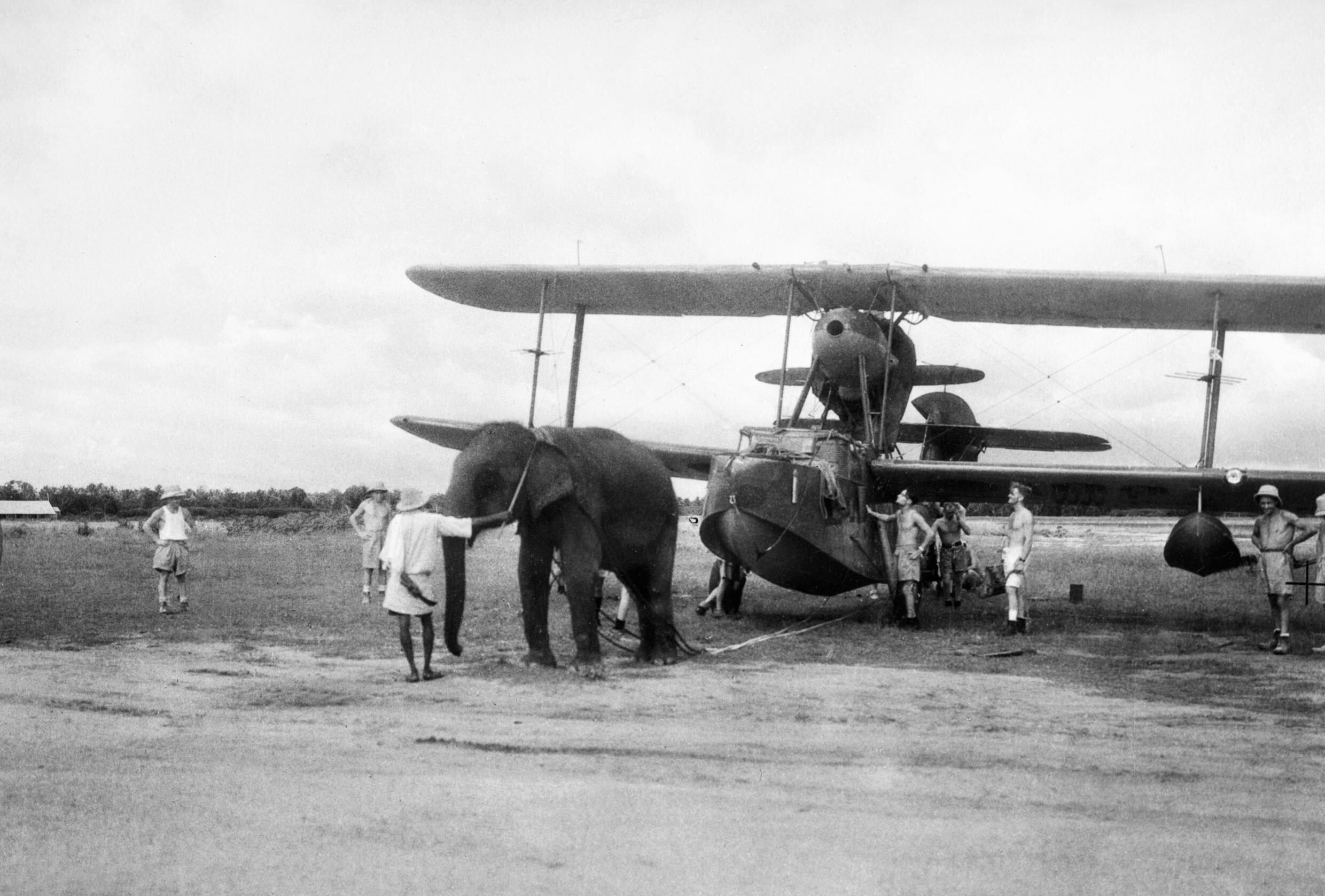 An_elephant_pulling_a_Supermarine_Walrus_aircraft_into_position_at_a_Fleet_Air_Arm_station_in_India,_June_1944._A24291