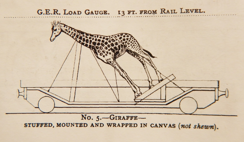 1 - giraffe